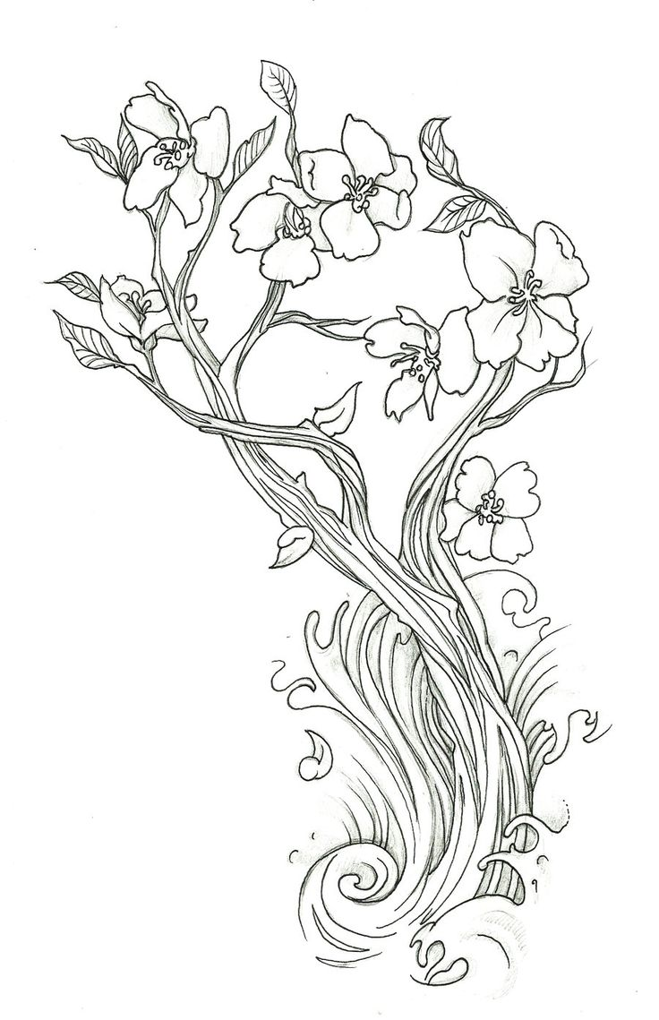 736x1139 Japanese Cherry Blossom Tree Coloring Page Japanese Cherry Blossom