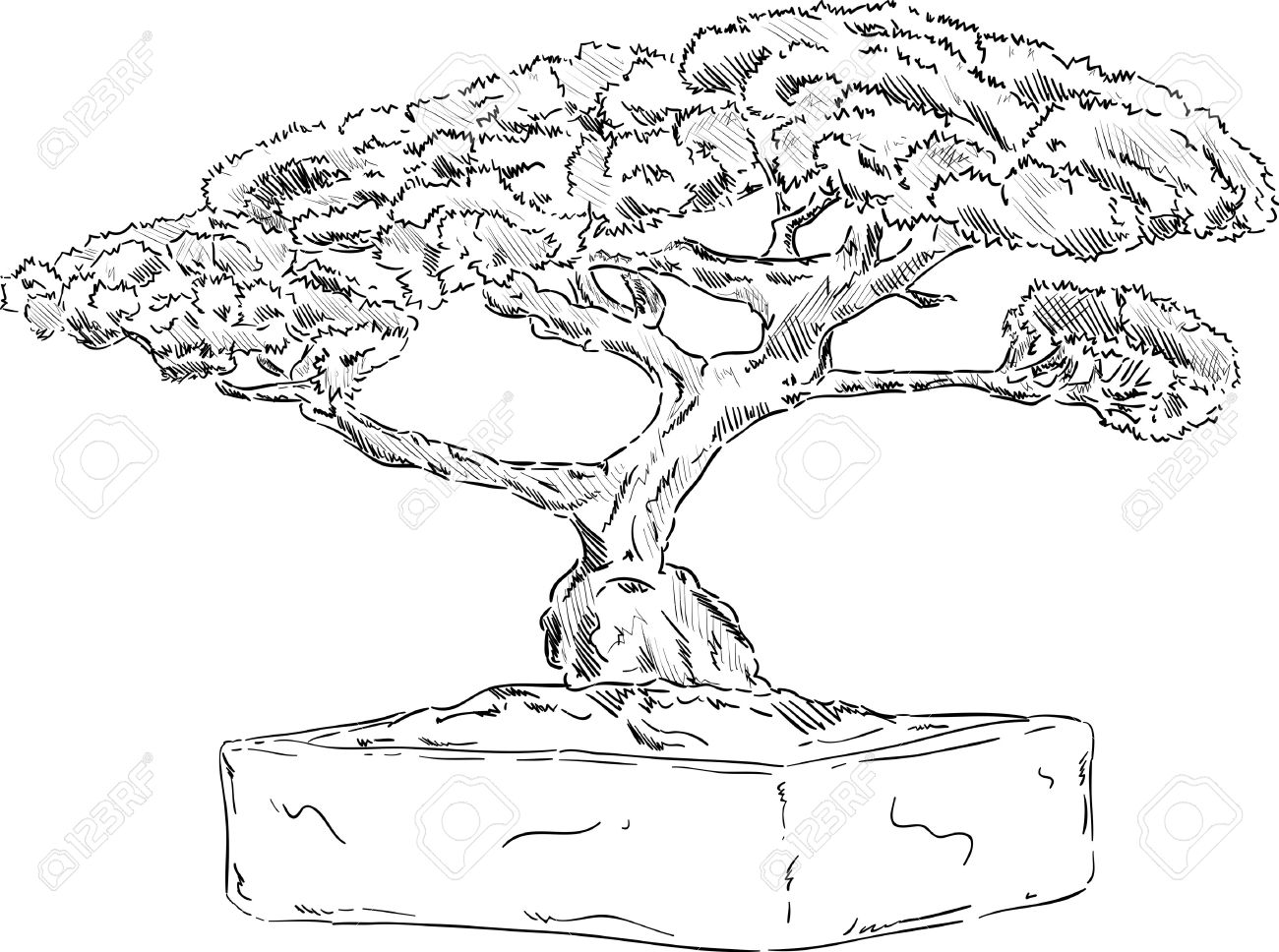 1300x968 Adult Bonsai Tree Drawing Bonsai Tree Drawing Easy. Bonsai Tree