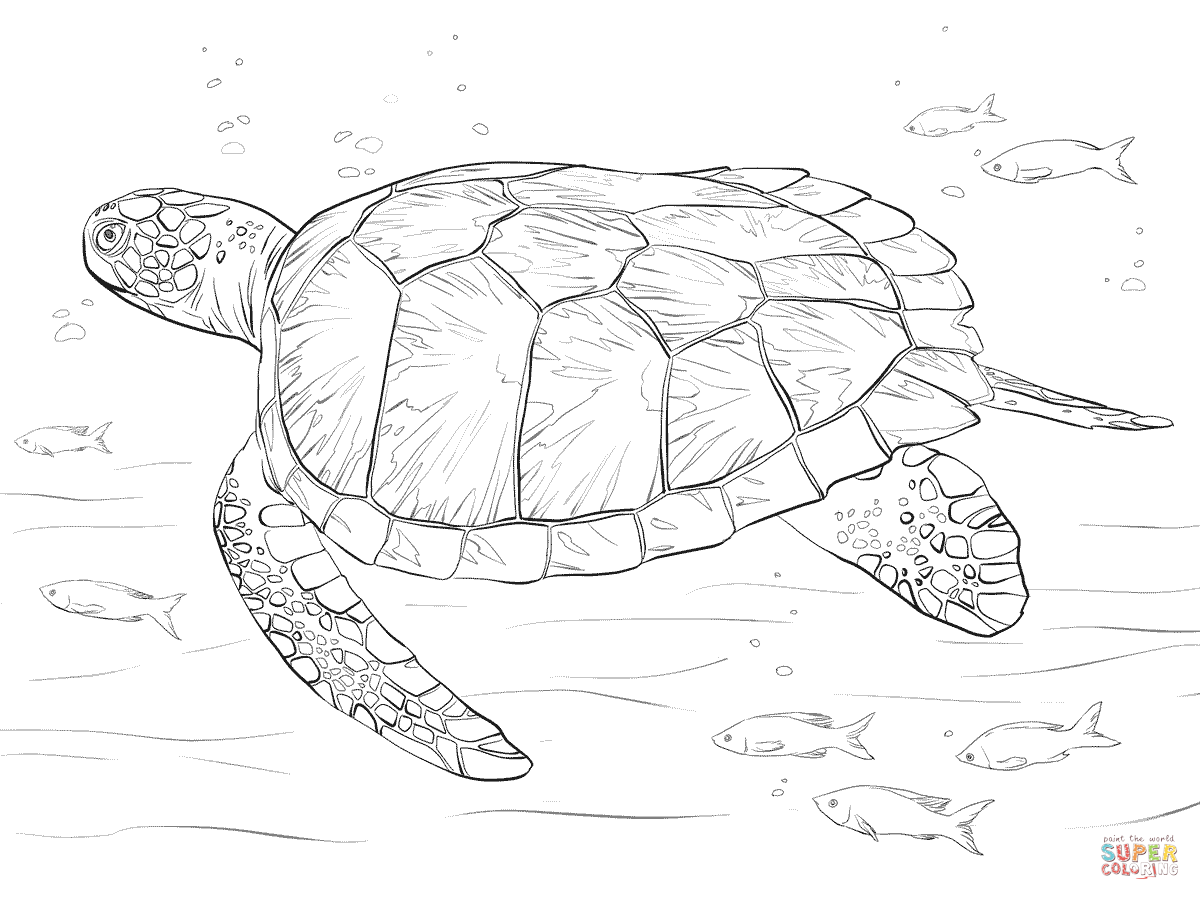 1200x900 Green Sea Turtle Coloring Pages