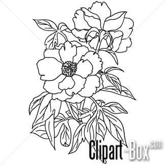 Jasmine drawing flower at getdrawings free for personal use 324x324 sketch clipart flower design mightylinksfo