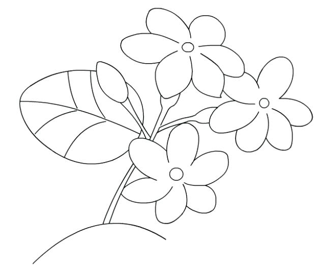 635x530 Jasmine Flower Coloring Pages
