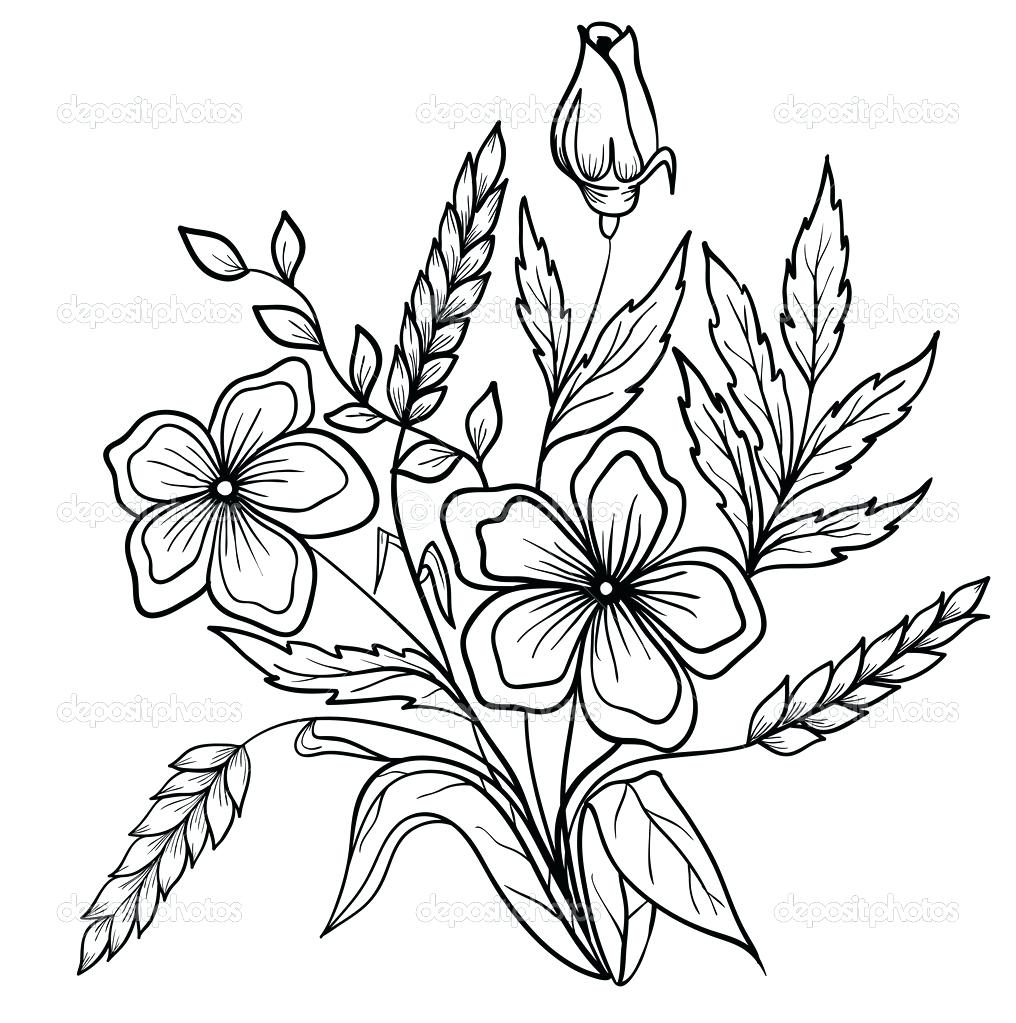 1016x1023 Flower Outlines Printable For Coloring Outline Of Page Flowers
