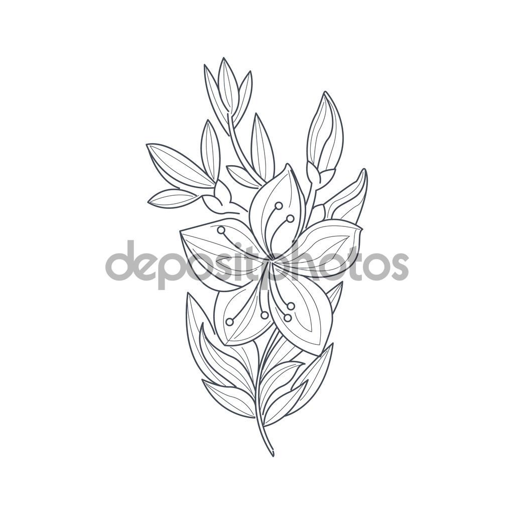 1024x1024 Jasmine Flower Drawing Ideas About Jasmine Flower Tattoos