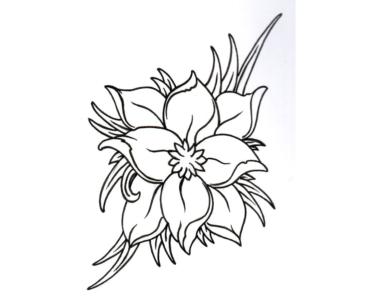 Jasmine Flower Drawing Tattoo At Getdrawings Free Download