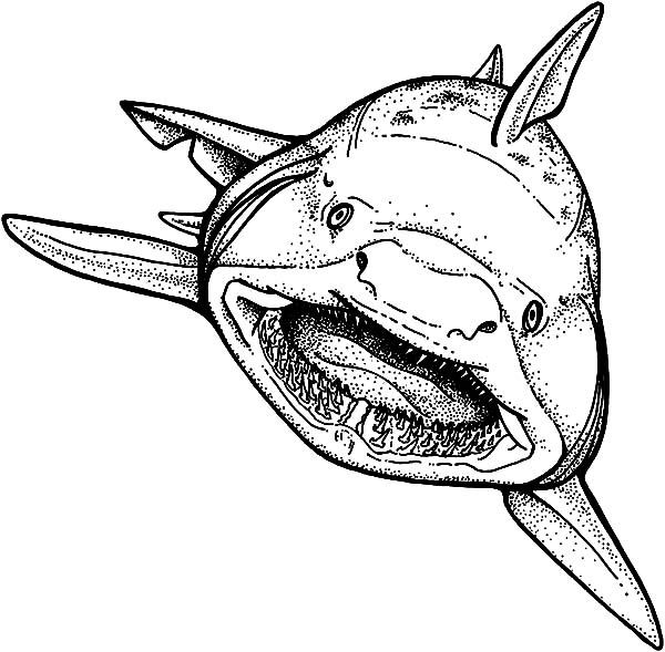 600x589 Shark Strong Jaws Coloring Pages Best Place To Color