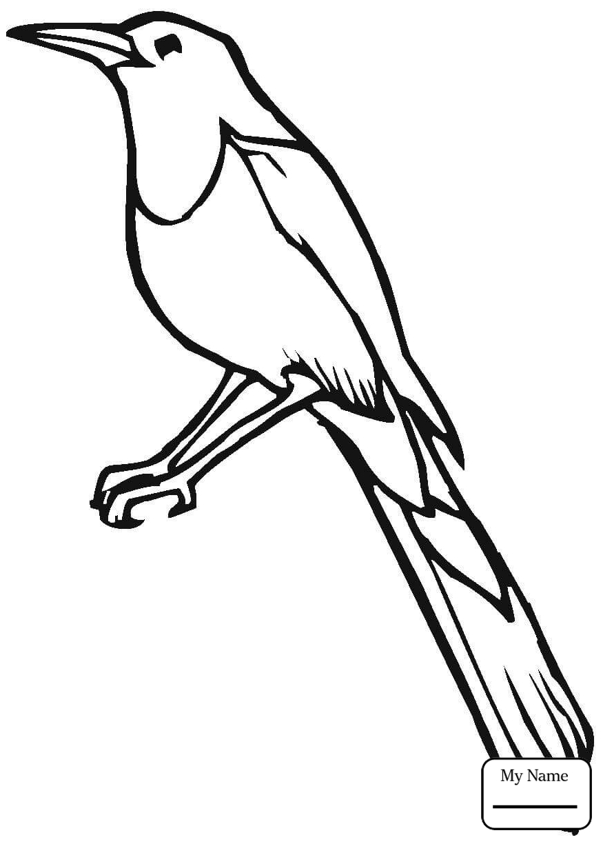 875x1224 Birds Cute Blue Jay Coloring Pages