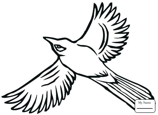 618x451 Chickadee Coloring Page