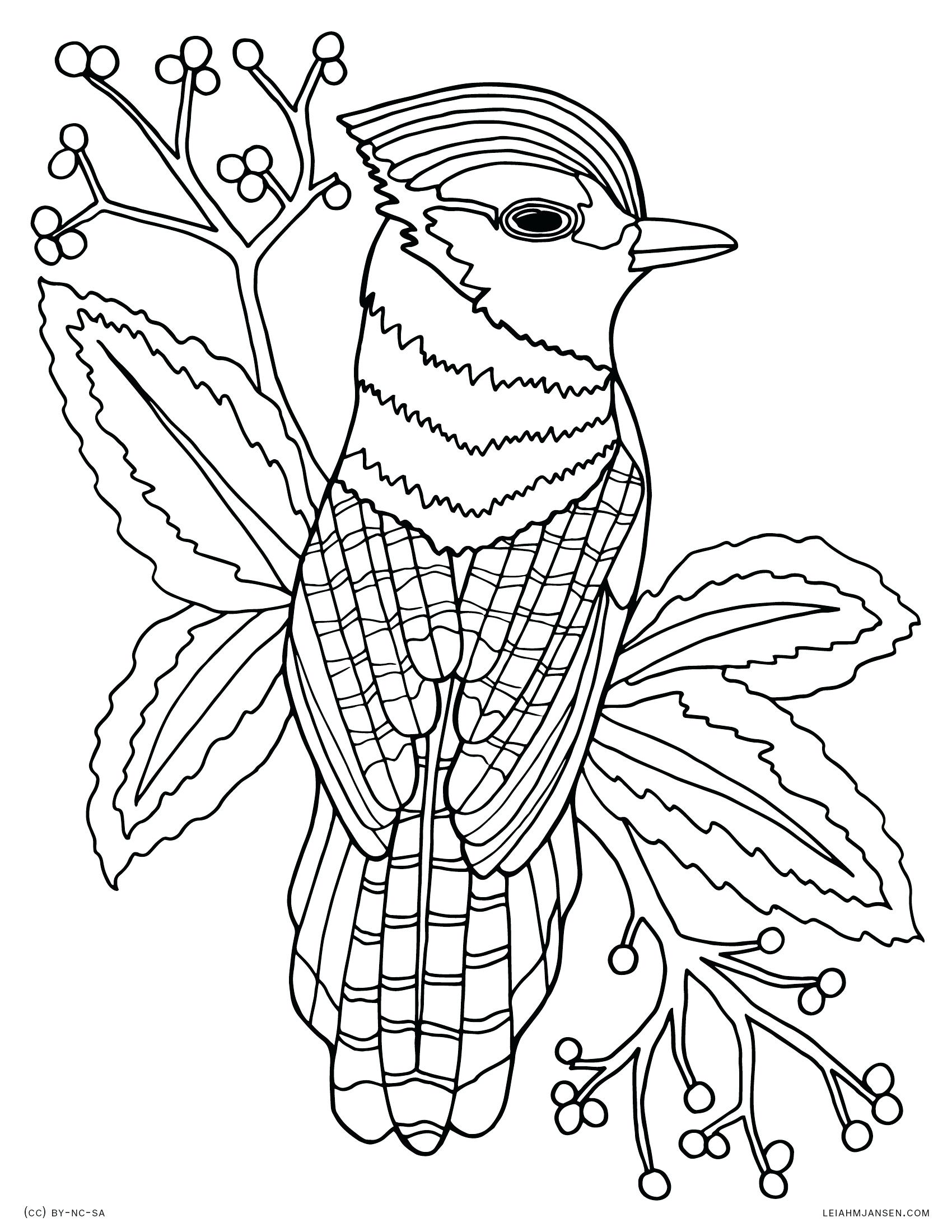 1700x2200 Coloring Paint Palette Coloring Page Bird Realistic Blue Jay