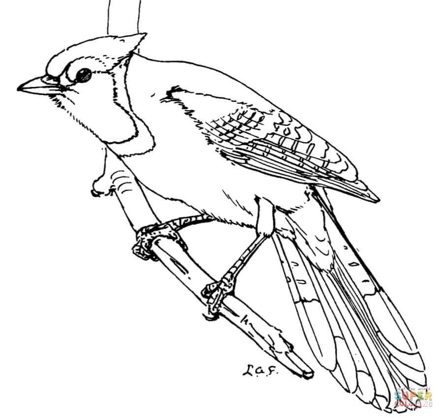900x852 Blue Jay Super Coloring Pta Bird Quilt
