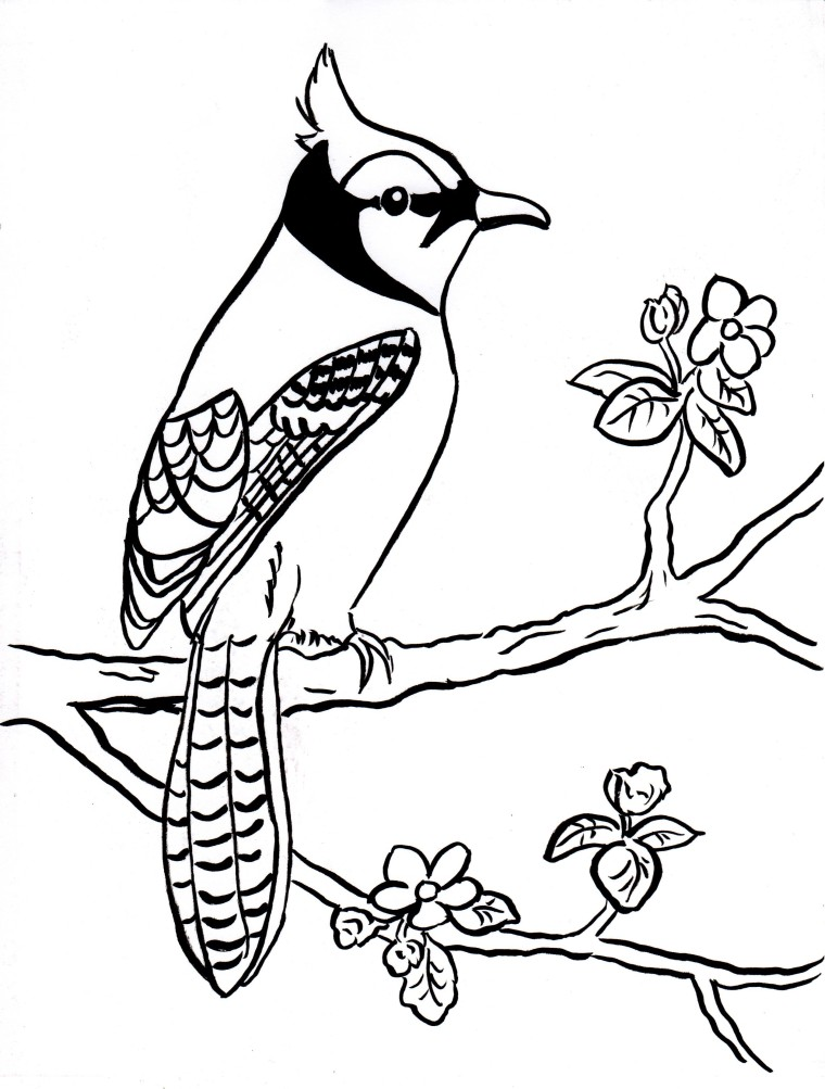 760x1003 Blue Jay Coloring Page