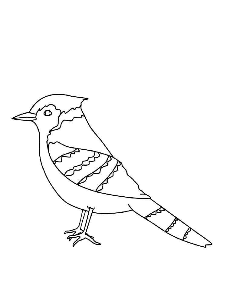 750x1000 Blue Jay Coloring Sheet Coloring Page For Kids