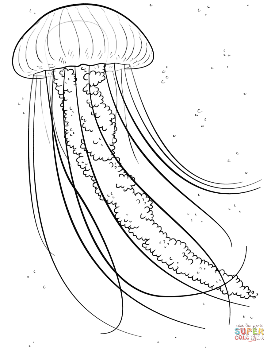 884x1134 Jelly Fish Coloring Page Jellyfish Category. Select