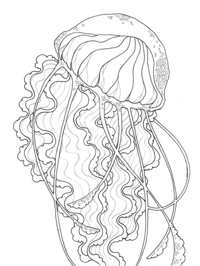 700x931 Most Beautiful Jelly Fish Drawing Ideas Wonderful Design