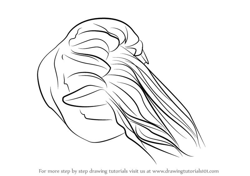 800x565 Learn How To Draw A Lion's Mane Jellyfish (Jellyfishes) Step By
