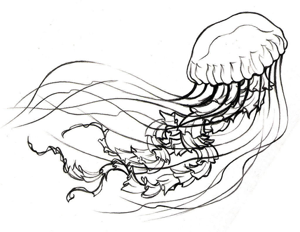 1024x791 Dont Be Jelly Jellyfish Drawing Visit Craftyjbirdcom For More Info