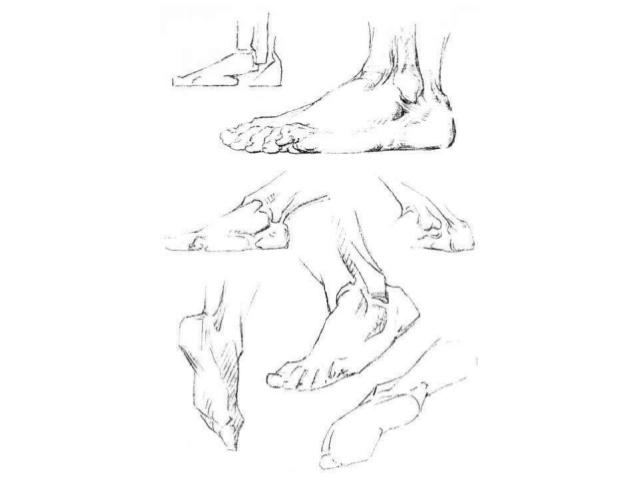 638x479 Head Hands Feet