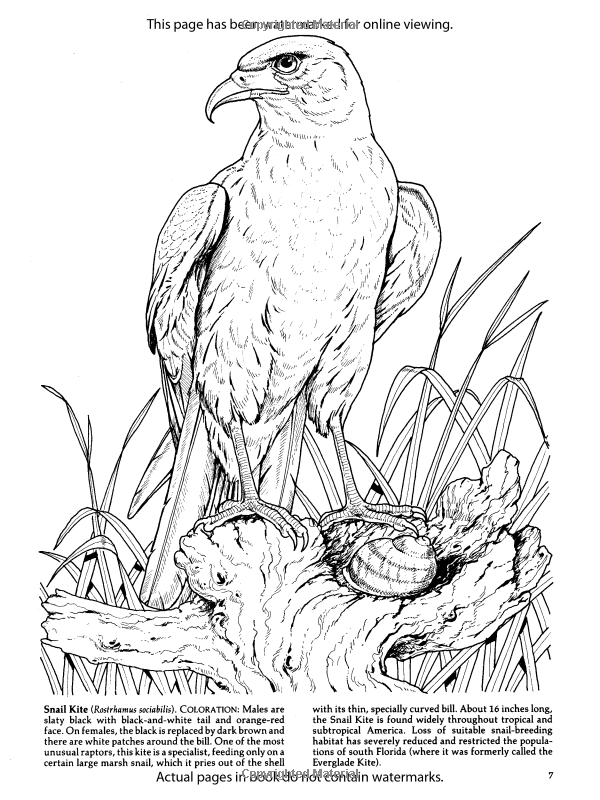 600x800 Birds Of Prey Coloring Book (Dover Nature Coloring Book) Amazon