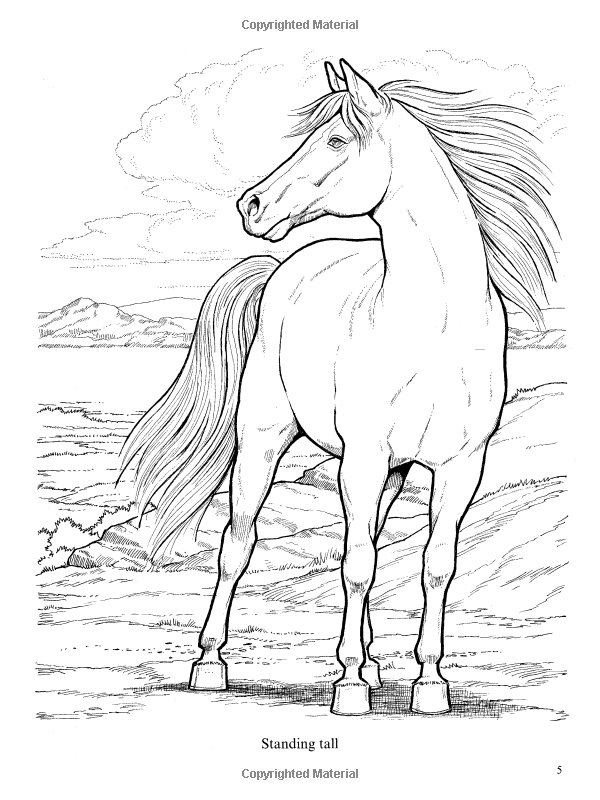 600x800 Wonderful World Of Horses Coloring Book Dover Nature