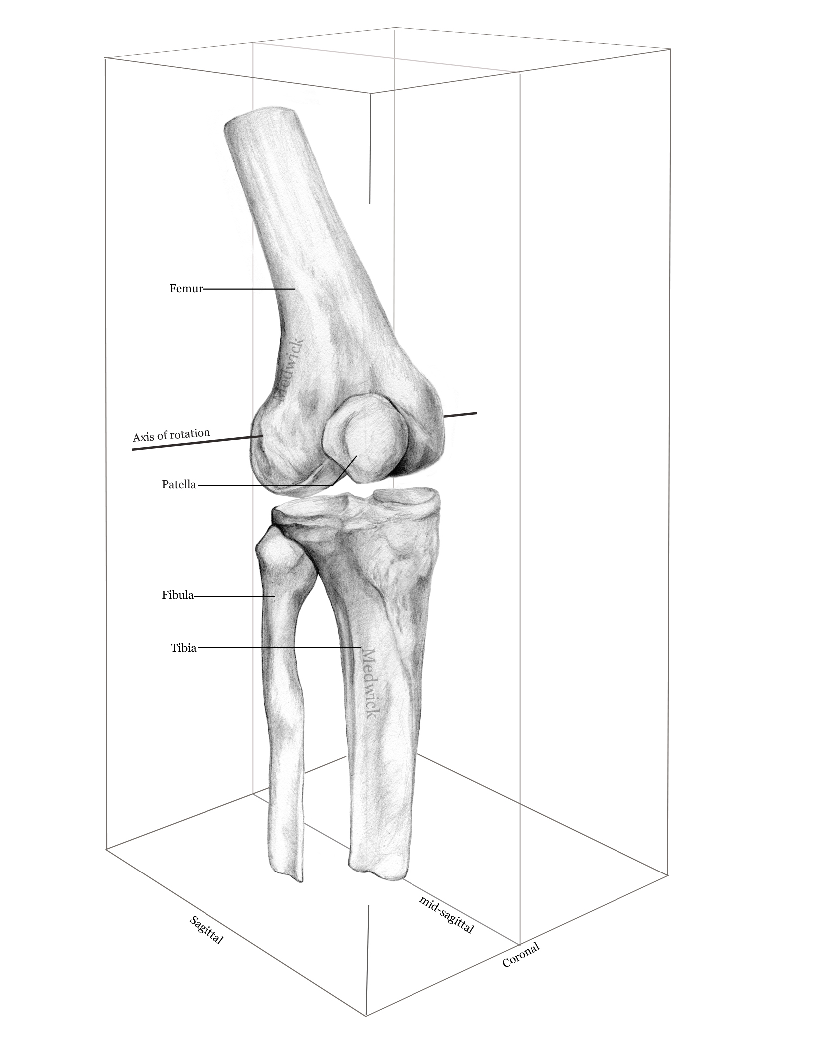 1650x2100 Knee Joint Liz Medical