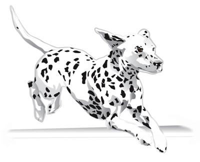 400x323 Dalmatian Note Cards Jump