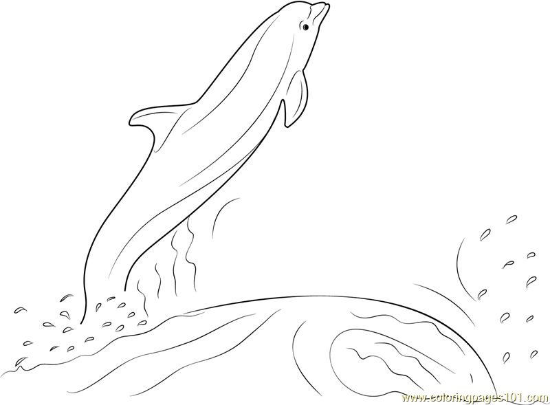 800x589 Dolphin Jumping Out Of The Water Coloring Page