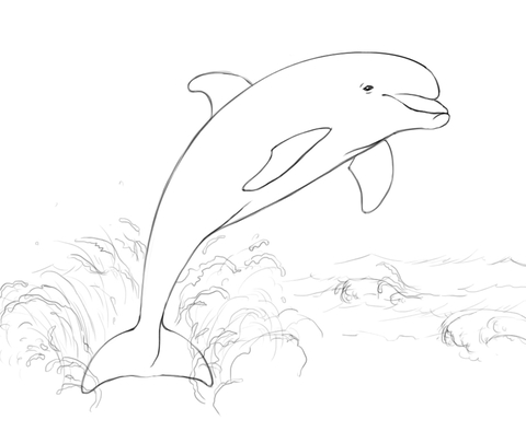 480x405 Dolphin Jumping From Water Coloring Page Free Printable Coloring