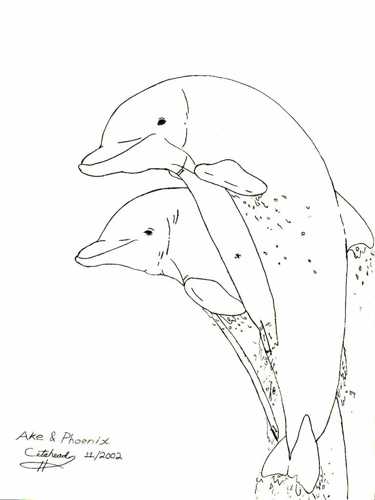 768x1024 Dolphin Sketches