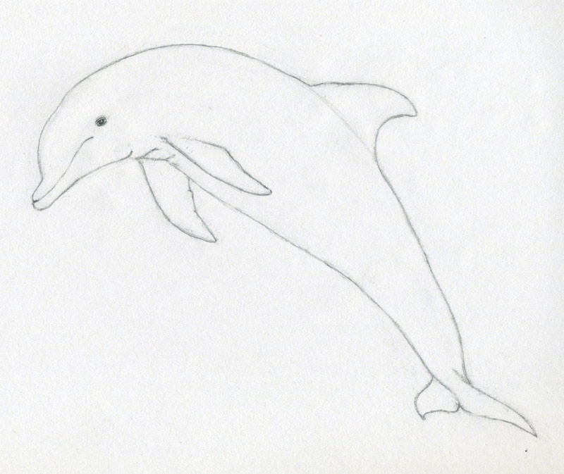 800x673 How To Draw A Dolphin