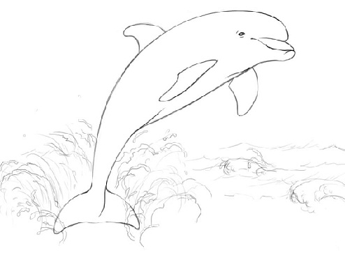 494x363 Top 9 Cute Dolphin Colouring Pages For Free Printable
