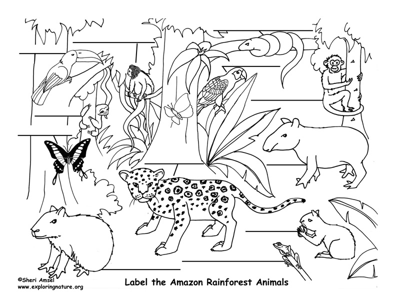 Jungle Animal Drawing