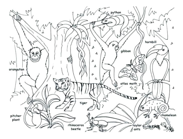 730x554 Jungle Animals Coloring Pages Animals Coloring Pages Packed
