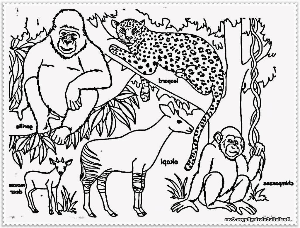 1024x778 Drawing Of Jungle Animals Drawing Jungle Animals