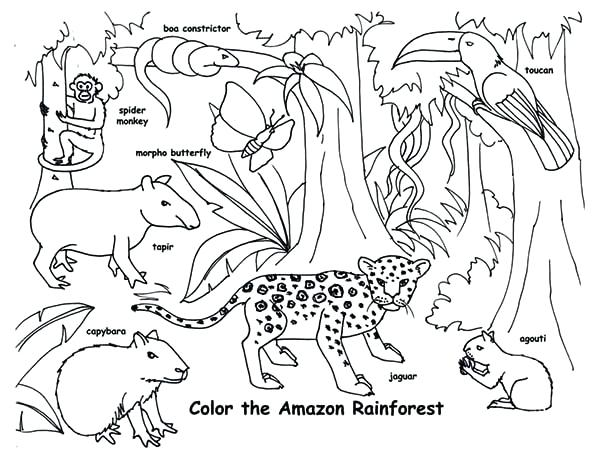 600x460 Jungle Animals Coloring Pages For Toddlers Magnificent Enchanting