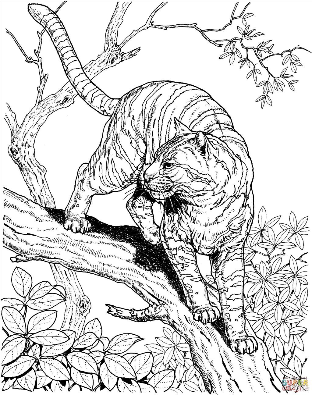 1024x1296 Ideal Jungle Coloring Pages Wallpaper Unknown Resolutions High
