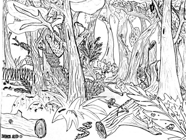 728x546 Petrified Forest Coloring Page Pine Tree Free Woodland Fox