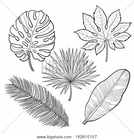 450x470 Set Tropical Palm Leaves, Sketch Vector Amp Photo Bigstock