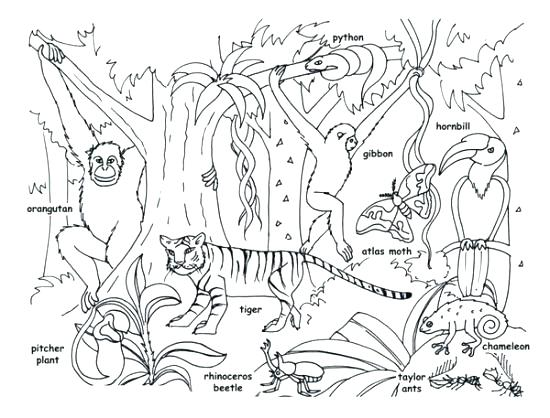 550x418 Jungle Junction Coloring Pages