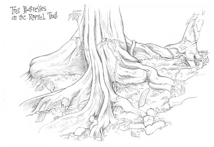 683x468 Costa Rica Jungle Amp Beach Sketchbook 2 ~ July By Irene Brady
