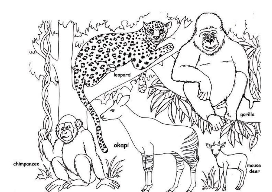 1148x811 African Animal Coloring Pages Free For
