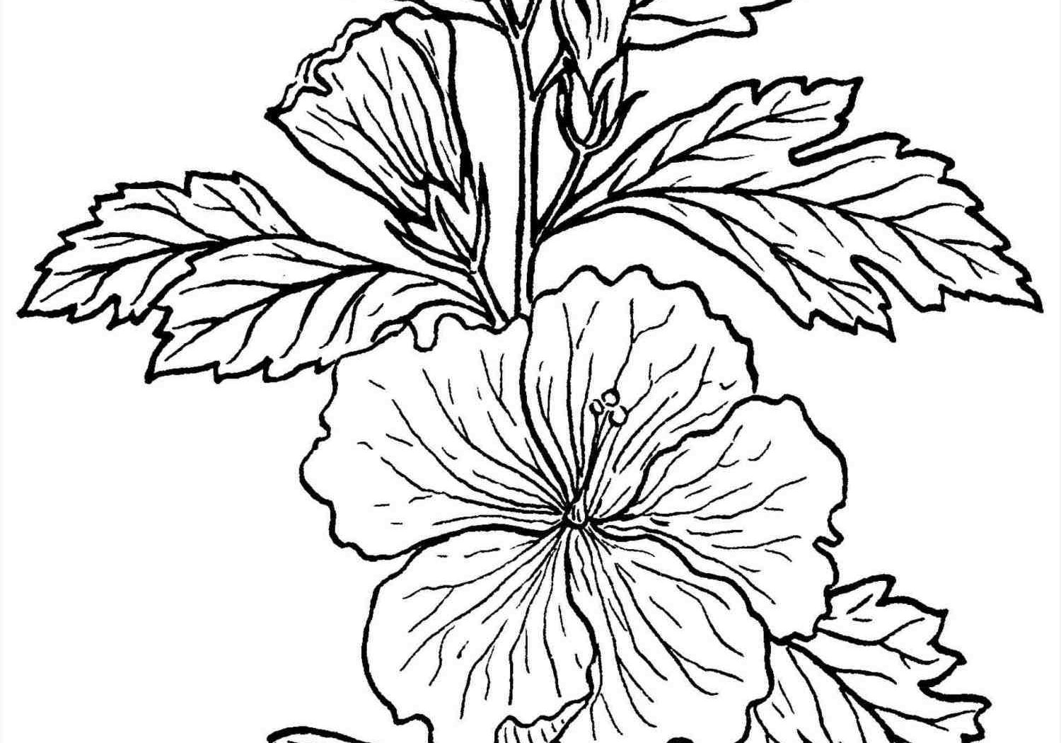 1500x1050 rainforest plants coloring pages nice kids how to draw free
