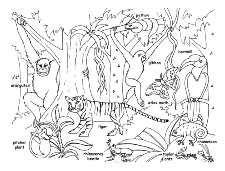 730x554 Tropical Rainforest Coloring Pages Tropical Jungle And Animals
