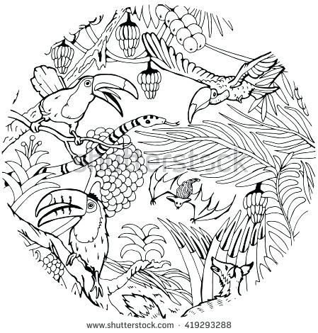 449x470 Jungle Coloring Page Wild Life In The Jungle Coloring Page Baby