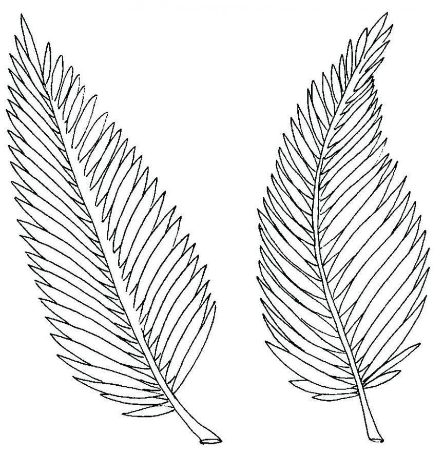 Jungle Leaf Drawing at GetDrawings | Free download