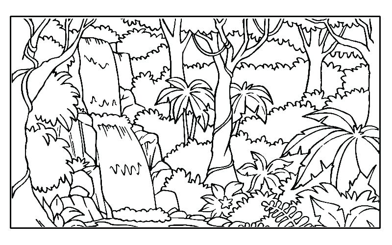800x500 Complete Rainforest Coloring Pages Fee Printable Image 3 Elegant