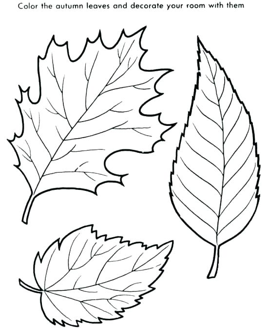 550x672 Coloring Pages Leaves