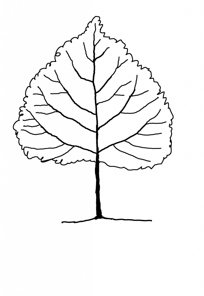 707x1024 Drawings Of Trees With Leaves Jungle Tree Leaves Ngorongclub