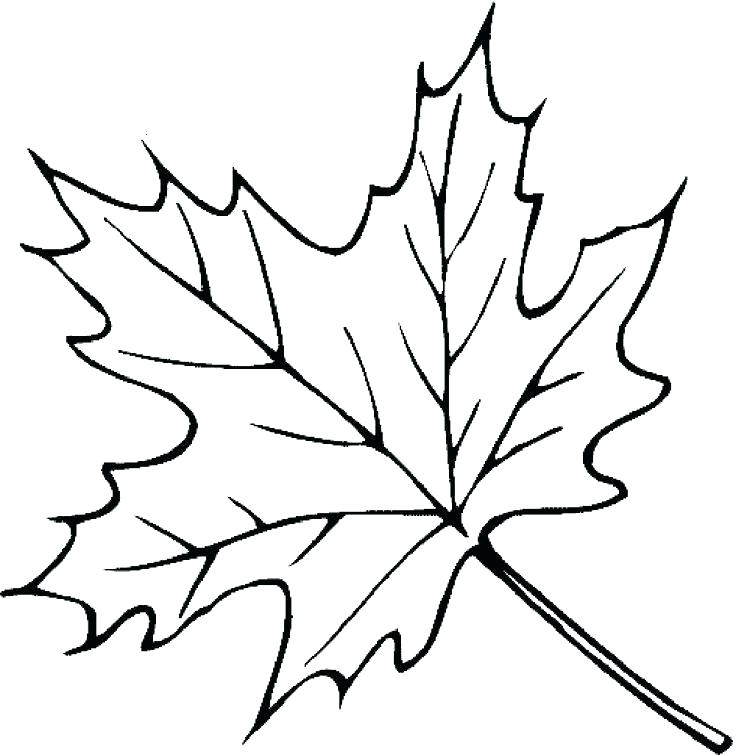 736x755 Coloring Pages Of Leaves Coloring Pages Of Fall Leaves Leaf Color