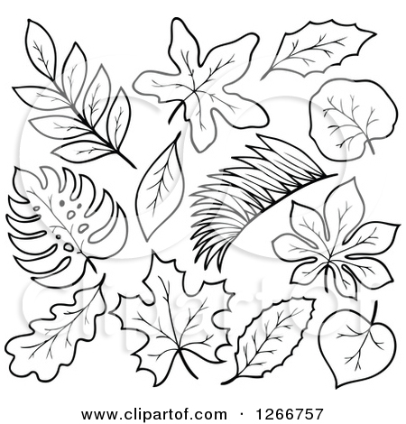 450x470 Jungle Leaves Black And White Clipart