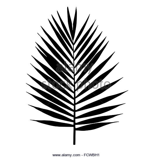 520x540 Jungle Leaves Silhouette Black And White Stock Photos Amp Images