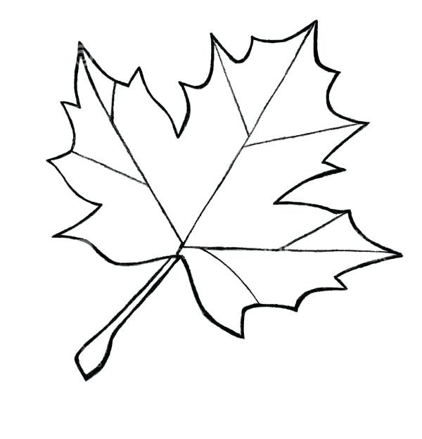 600x624 Autumn Coloring Pages Pdf Leaves Download Jungle Best Coloring